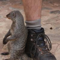 Interaction with Wild Animals